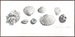 Дары моря