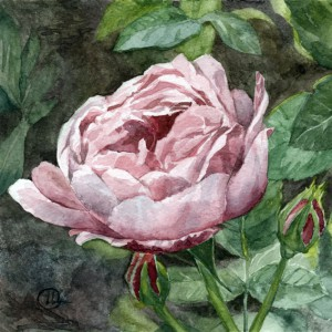 watercolor flowers rose
