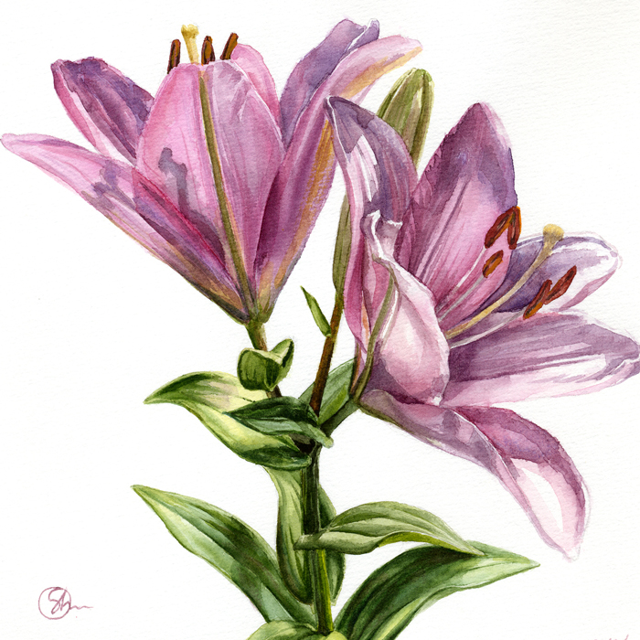 Watercolor Акварель Лилии