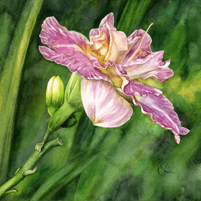 Watercolor Акварель Лилейник