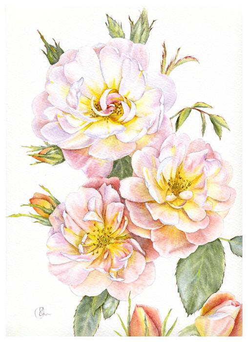 Watercolor Акварель Персиковые розы