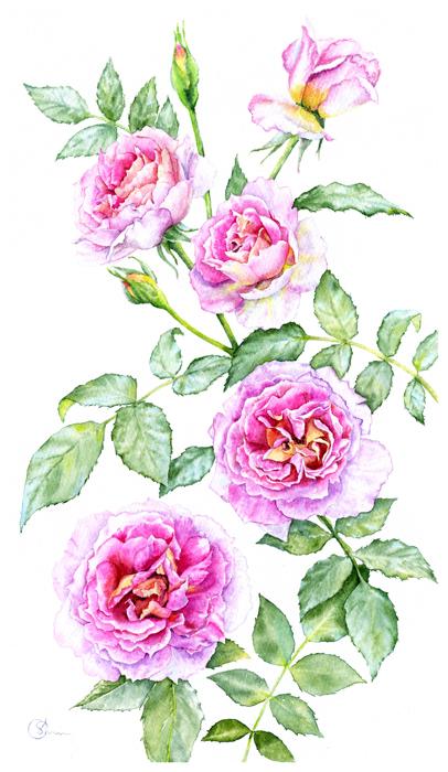 Watercolor Акварель Розовые розы